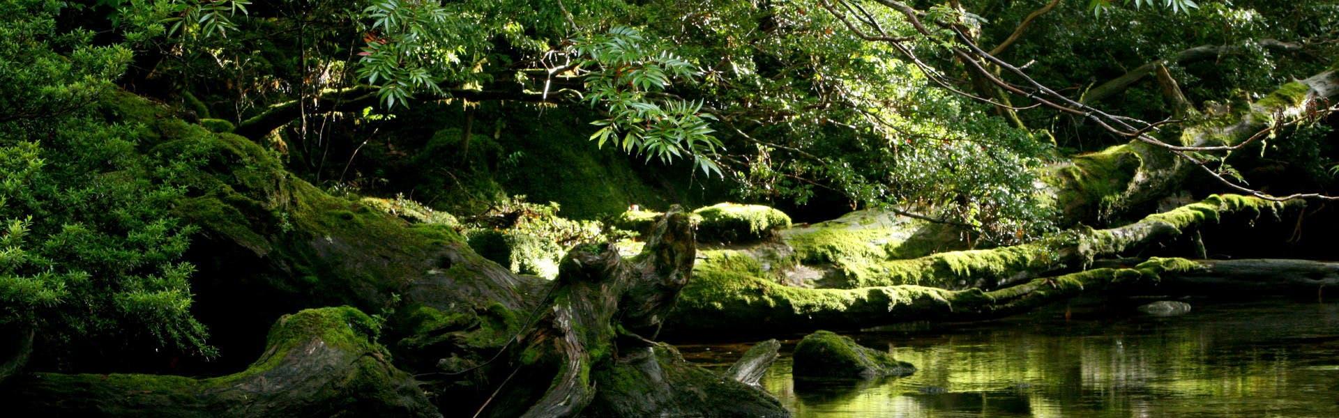 屋久島の画像 p1_28