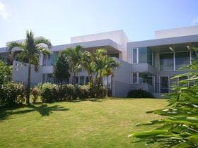 The Green Terrace