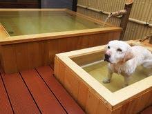 愛犬と泊まれる温泉旅館 鬼怒川 絆