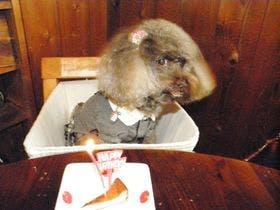 愛犬とフレンチディナーを楽しむ宿 GuZu