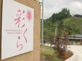 Hatago Sakura