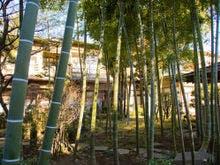 木創りの宿きこり 竹林庭
