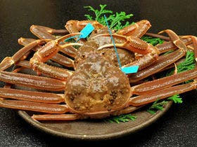 【加能蟹】一度は食べたい加能ガニ!皆で分け分け。お得に加能蟹を食す